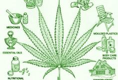 Visiones de un mundo post-legalización de la mariguana