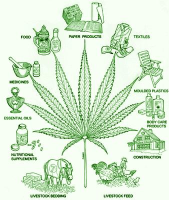 mariguanaproductos